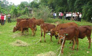 Chủ động phòng-chống dịch bệnh cho đàn gia súc, gia cầm vụ thu đông